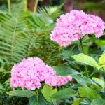 Blütenpracht: Ferienwohnung in Bad Gandersheim bei Klügers