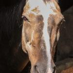 Unser früheres Pferd: Ferienwohnung in Bad Gandersheim bei Klügers